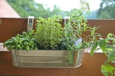 Herbs in pots in hanging basket- these containers were on sale at Jo-ann fabrics 9-18-14. And I put them back darn it.