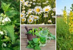 10 léčivých rostlin, které si můžete nasbírat v měsíci červnu