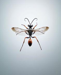 Entomophagy by Jonathan Gregson — photography