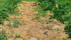 A MAGYAROK TUDÁSA: Kertészeti naptár - Zöldségeskert - Vetés - Növények és Rovarok Társítása Outdoor, Outdoor Decor, Farm, Garden