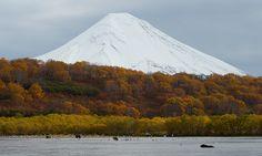 Bear and volcano, Kamchatka