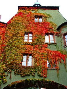 ~~autumn dress by the-father ~ germany~~