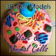 3D models are a fun, easy way to learn about plant and animal cells and this science project is often assigned in both middle and high school...
