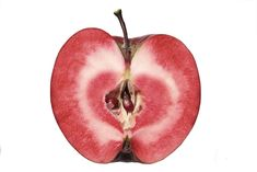I couldn't believe my luck today when I found a fruit bearing-sized Redlove 'Circe' Apple tree (roughly 2 metres tall and well-branched) on sale for 50 kroner (about $10 CAD, or 7€). Since the 1830s...