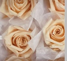 24.00 SALE PRICE! Bring soft, floral beauty to your wedding or special event with these pastel buds. The Peach Preserved Roses will bring a sweetly sumptuous...