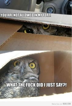You are not allowed in my fort. WTF did I JUST SAY?! #hooters #LetsGetWordy