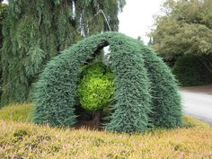 topiary trees in oregon