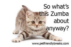 Zumba Quotes Of The Day | Kitten Zumba | Pet Friendly BreaksPet Friendly Breaks