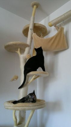 Cat Tree from real branches- I wish I could have this for my cats! They have one but this is awesome!