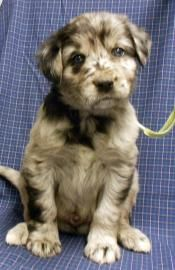 My puppy Barkley's picture from the Wright-Way Rescue Website