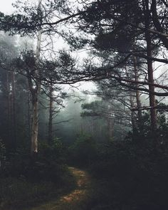 Misty day in the forest near the Baltic Sea. #mistyday #mistyforest #darkmood #darkforest #northernnature #latvia🇱🇻 #latvia #travellatvia #jurkalne #balticsea #visualsoflife #outdoortones #greatnorthcollective #moodynaturelandscapes #visualpoetry #visualcrush #instapoetry #poetryofinstagram #calledtobecreative #madetocreate #mixedmedia #moodygram #moodygrams #inkandverses #darkmoody #путешествие #творчествобезграниц #латвия #森林浴 #森林 Misty Forest, Dark Forest, Misty Day, Baltic Sea, Exploring, Create, Nature, Travel, Outdoor