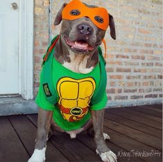 Best Doggy Costume page I have found yet! Take a look, great quality ideas with tutorial links! imagenes tiernas 19 Creative Costumes You Can Make For Your Dog This Halloween Pitbull Halloween Costumes, Pitbull Costumes, Cute Dog Costumes, Dog Halloween, Creative Costumes, Costume Ideas, Couple Halloween, Halloween Ideas, Pit Bulls