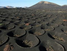 """visitheworld: """" La Geria wine district on the lava fields of Lanzarote Island, Spain (by de kist). Lanzarote is pretty amazing for how resourceful it is. This is an island with NO. Tenerife, Places To Travel, Places To See, Beautiful World, Beautiful Places, Reisen In Europa, Voyage Europe, Spain And Portugal, Canary Islands"""