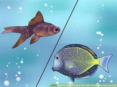 Obrázek s názvem léčbě tropické ryby s běloskvrnitosti (ICH) stupeň 1