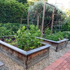 Vegetable beds| Eat