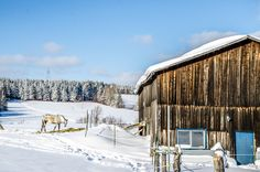 A Frosty Lunch - white speckled horses on a farm in #Charlevoix eating lunch as I drool over the freshly fallen snow resting on the barns and trees around them.