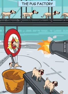 Meanwhile At The Pug Factory...