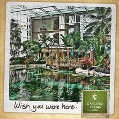Gaylord Palms Resort in Kissimmee, FL