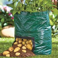 Have a mini garden anywhere at home, even when space is limited! Compact and lightweight planting bags allow you to grow a garden any place....on the patio, dec