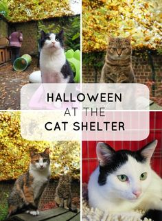 Halloween at the cat shelter http://www.traveling-cats.com/2016/10/cats-from-woluwe-st-lambert-belgium.html