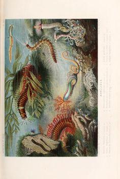 Le Monde de la Mer, A. Fredol and P. Lackerbauer, 1866.