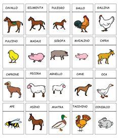 comuniCAAzione: Categorie: dizionario della fattoria