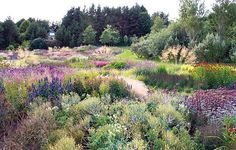 Stipa gigantea needs to be positioned right to be fully appreciated, even more than other grasses. Photo: Piet Oudolf