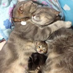 20 Sleepy Kittens That Need a Vacation Already