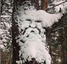 "Hidden Face in Snow Looks like old man winter"" aka Jack Frost"" made himself known...;)"
