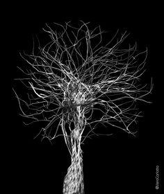 Árvore da Vida Dandelion, Flowers, Plants, Paintings, Tree Of Life, Paint, Dandelions, Painting Art, Plant