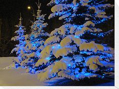 I love the look of blue lights on evergreens