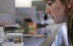 Mysterious illness tied to marijuana use on the rise in states with legal weed