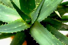 Aloe vera jótékony hatása – számos jótékony hatása ismert, ami miatt nagyon népszerű növény lett az utóbbi időben. Te ismerek ezeket? Best Hair Loss Shampoo, Treating Insomnia, La Constipation, Best Shampoos, Chubby Cheeks, Insect Bites, Hair Loss Treatment, Aloe Vera Gel, Vase