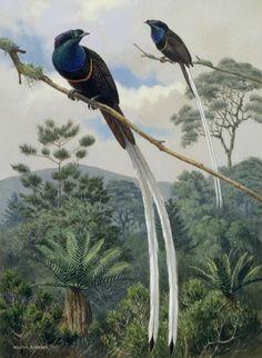Bird of paradise hook up by jaime margary