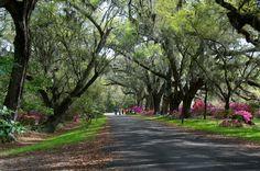 Charleston, SC - Magnolia Plantation