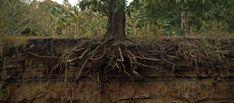 Tree fertilizing, deep root feeding for healthy trees - Cape Cod ...
