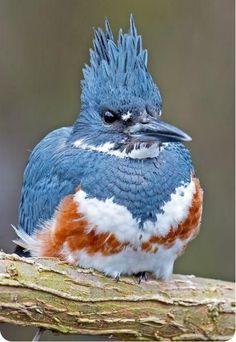 Veľké vtáky Gone Wild