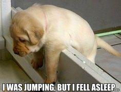 Funny dog – I was jumping but I fell asleep