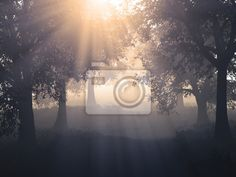 Autumn fog - Wall Murals • Photo Wallpaper • PIXERSIZE.com