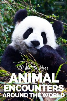 Looking to add some animal encounters to your travel bucket list? Here are 20 Not to be Missed Animal Encounters From Around the World   The Planet D Adventure Travel Blog