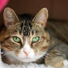 Kitty - Cat Rehoming & Adoption - Wood Green Animals Charity