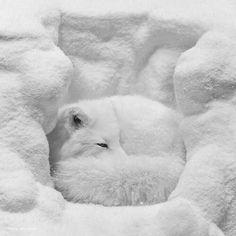 Brrr. Cozy COLD home