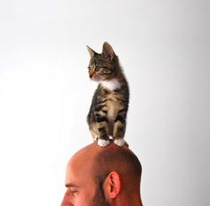 cat viewpoint