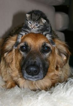 Dogs and cats, living together