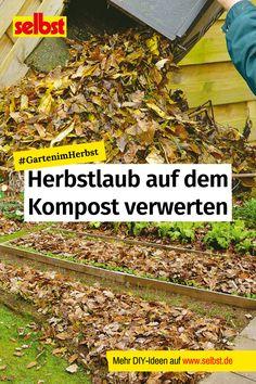 #Bunt verfärbte #Blätter, die im #Herbst den #Garten schmücken, sind zwar hübsch anzusehen, können aber auch schnell #gefährlich werden. #Hausbesitzer haben #Pflichten, das #Herbstlaub zu #entfernen. Aber wohin mit dem #Laub? Am einfachsten ist es, die Blätter einfach zu #kompostieren – wir verraten, wie das geht! #selbst #GartenimHerbst #Gartenarbeit #Gartenpflege #Kompost #Nachhaltigkeit #Winter #Gärtnern #Flächenkompostierung Bunt, Hiking Boots, Overwintering, Autumn Leaves, Yard Maintenance, Compost, Sustainability, Plants