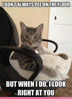 The Most Interesting Cat in the World Not-so-secretly Hates You