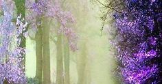Just Pinned to LilacPurpleViolets: Gorgeous Spring Blooms! #PhotographySerendipity #TravelSerendipity #travel http://ift.tt/2up9A2Q