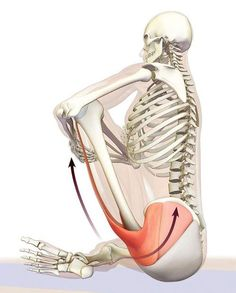 Yoga Fitness, Fitness Tips, Fascia Stretching, Psoas Release, Hip Problems, Deep Breathing Exercises, Lotus Pose, Tight Hip Flexors, Psoas Muscle