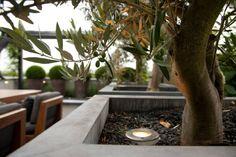 olive trees in large concrete planters - Fotos van diverse aangelegde tuinen - Martin Veltkamp Tuinen