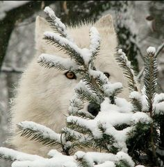 Winter hiding